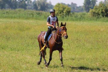 www-provet-cz-krmivo-a-veterinarní-pripravky-pro-kone